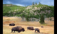 Yellowstone National Park is one of the most-visited of the more than 400 U.S. National Parks.