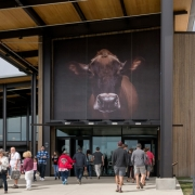 A 30 ft tall Tillamook Jersey cow greets the 1.3 million guests that visit the Creamery every year.