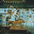 Hall of Biodiversity, American Museum of Natural History, Ralph Appelbaum Associates