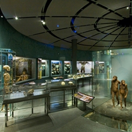 Hall of Human Origins, American Museum of Natural History