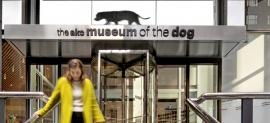 Doggone Good! Gensler Redesigns AKC's MoD