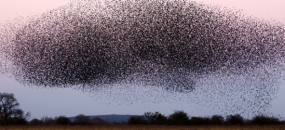 Swarm Intelligence: Designing with 1000 Eyes