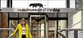Doggone Good! Gensler Redesigns AKC's MoD