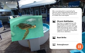 Cortina Productions Saving Turtles with VR at the Loggerhead Marinelife Center