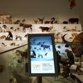Wild: Amazing Animals in a Changing World, Melbourne Museum, MV Studios, Museum Victoria