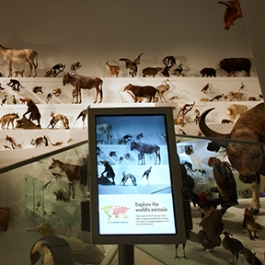 Wild: Amazing Animals in a Changing World, Melbourne Museum, MV Studios, Museum Victoria